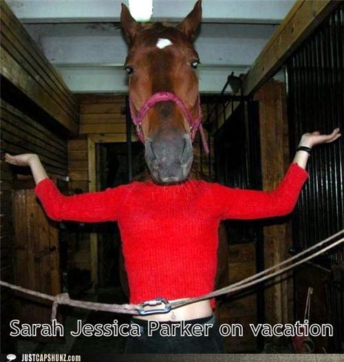 animals headless horses sarah jessica parker vacation wtf - 5156771328