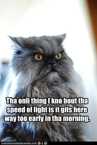 about,arrives,caption,captioned,cat,do not want,early,know,light,morning,only,speed,thing,too