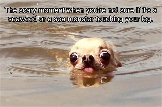 Memes funny animals - 5157125