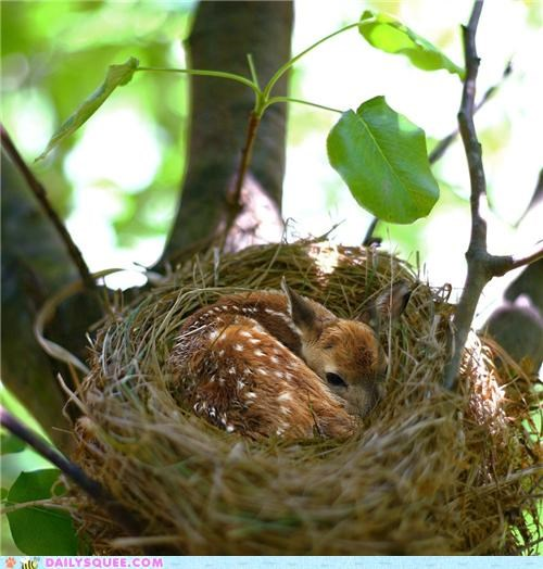 baby bird curled up deer fawn Hall of Fame imitating nest probably photoshopped safe sleeping - 5157599232