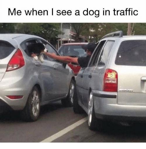 "Funny Dog Memes , ""Me When I See Dogs Memes"", dog memes"