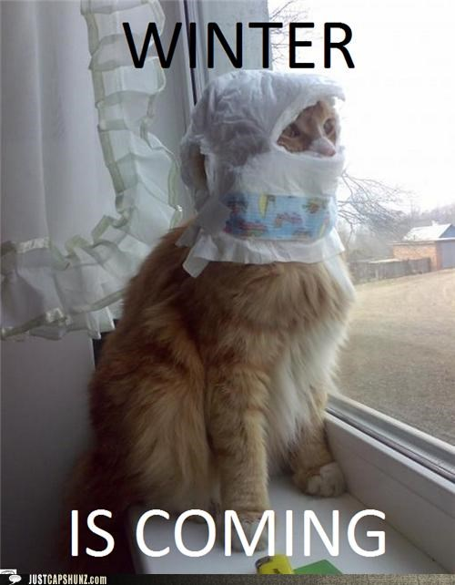 animals,Cats,diapers,I Can Has Cheezburger,Memes,wat,winter,Winter Is Coming,wtf