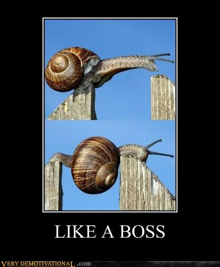 boss climbing hilarious snail - 5157868800