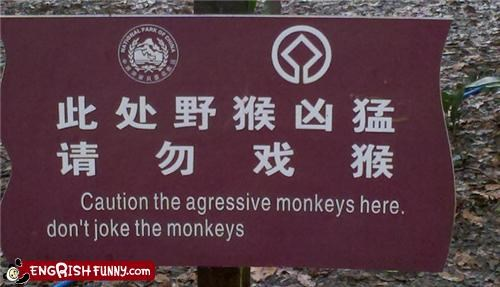 animals,caution,joke,joking,monkey,park,warning