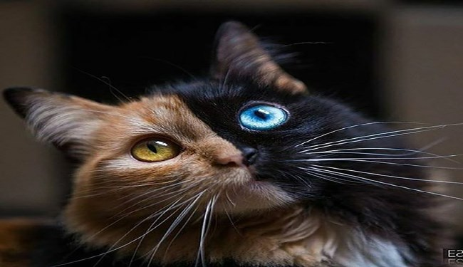 dogs eyes pretty colors Cats - 5158405