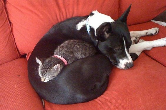 dogs pillows Cats funny - 5158661