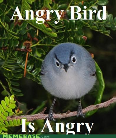 angry birds,animemes,eggs,Memes,quick,video games