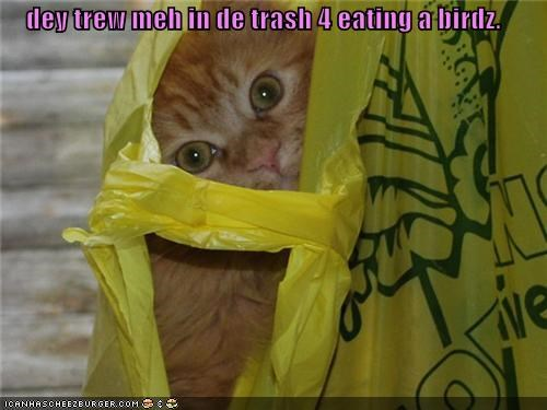 dey trew meh in de trash 4 eating a birdz.