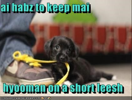 chewing puppy shoe laces shoes short leash - 5159520768