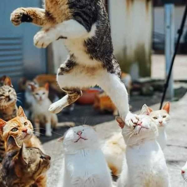photos Perfect Timing animals - 5159685