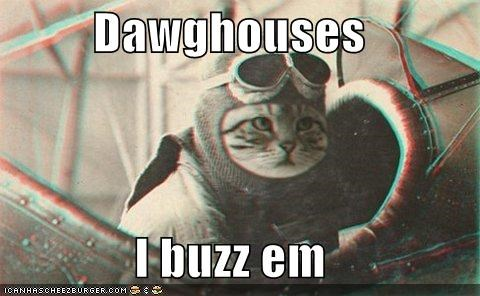 airplanes amelia earhart animals Cats doghouses I Can Has Cheezburger pilots planes - 5159692544