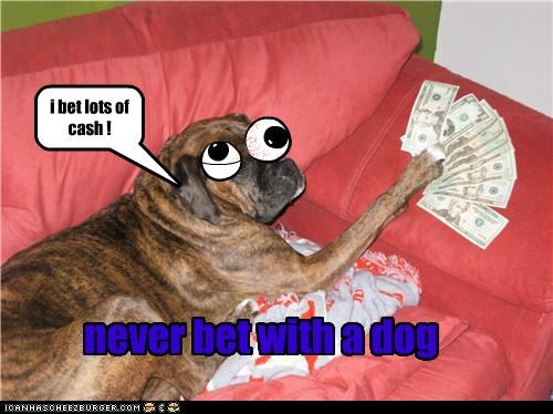 i bet lots of cash ! never bet with a dog NO! YES! Cleverness Here WILL YOU? WILL YOU?