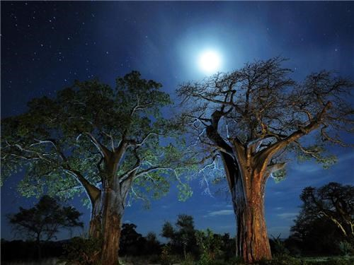 africa,baobab trees,blue,getaways,midnight blue,moon,night,night photography,night time,sky,stars,tanzania,trees