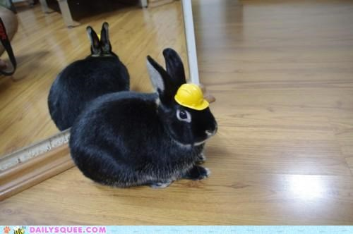better builder building bunny expanding happy bunday hard hardhat hat house rabbit