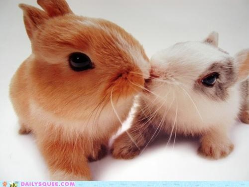 advice,bunnies,bunny,Hall of Fame,happy bunday,kissing,partner,rabbit,rabbits,romance,slow dance