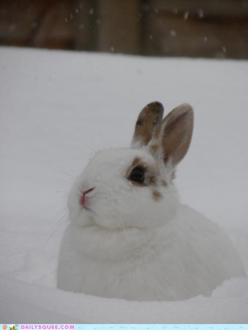 asking,bunny,cold,Command,comparison,happy bunday,house,meme,not,rabbit,snow,warmth,warning