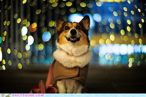 acting like animals,astonished,corgi,dogs,holden caulfield,lights,mesmerized,new york,new york city,the catcher in the rye,traveling,trip