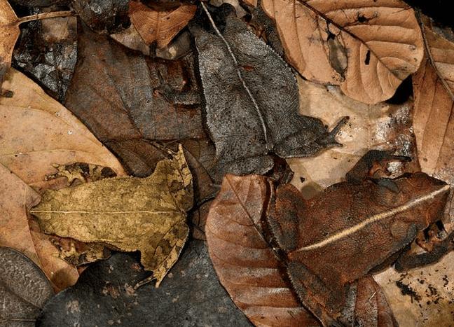 nature photos wheres waldo animals - 5161221
