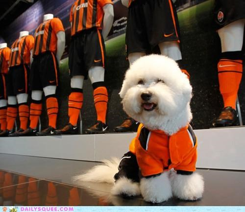 acting like animals bichon friese dogs football game-winning goal happy jersey lolwut player soccer star story ukraine - 5161242624
