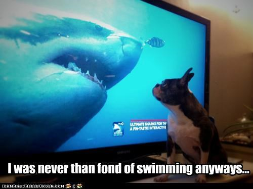 boston terrier,scared,shark,shocked,swimming,television,TV,uh oh