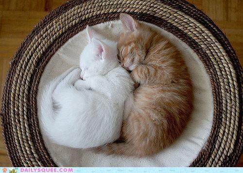 Babies baby cat Cats Hall of Fame kitten pun similar sounding sleeping yang yawn yin