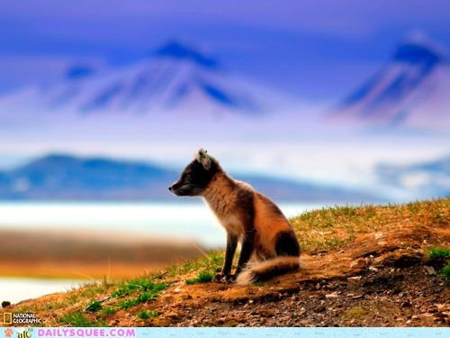 baby,breathtaking,evocative,foreground,fox,grizzly bear,kit,song