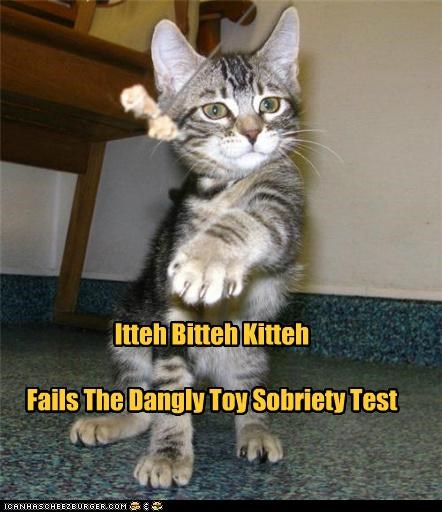 best of the week dangly FAILS Hall of Fame kitten sobriety test toy - 5161364224