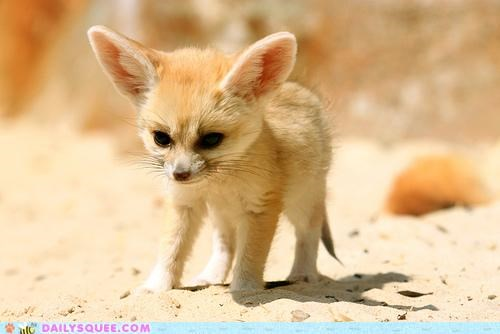 adorable baby fennec fennec fox Hall of Fame marveling still stop tiny unbearably squee - 5161396224