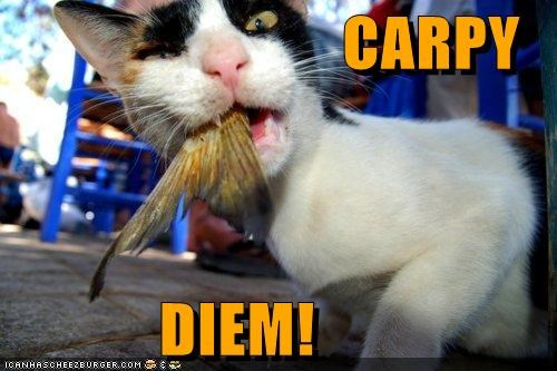 carp carpe diem eat fish food nom - 5161842688