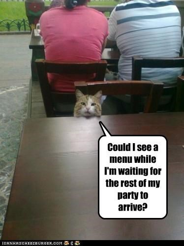 cat food hungry lolcat noms restaurant waiting - 5162179072