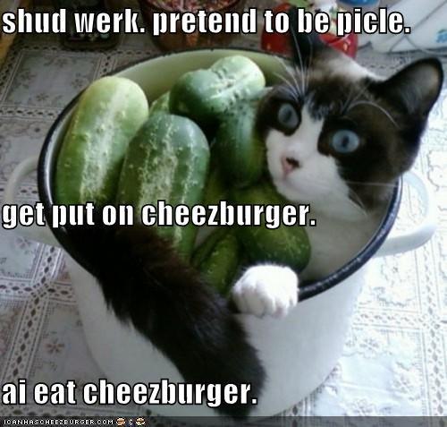 Cheezburger Image 5162445312