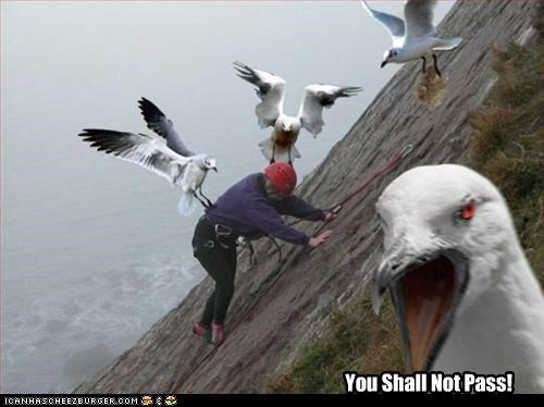 animals,attack,birds,I Can Has Cheezburger,Lord of the Rings,quotes,seagulls,you shall not pass