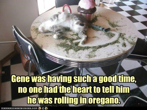 Gene was having such a good time, no one had the heart to tell him he was rolling in oregano.