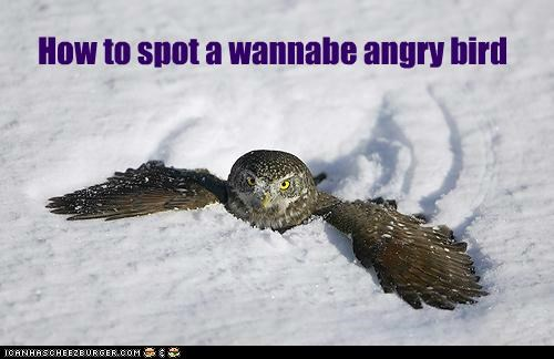 How to spot a wannabe angry bird