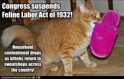 Congress suspends Feline Labor Act of 1932! Household contentment drops as kittehs return to sweatshops across the country!