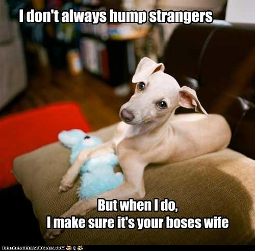 boss,couch,greyhound,hump strangers,job,Plush,stuffed animal,the most interesting dog in the world,toy