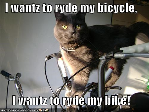bicycle,bike,caption,captioned,cat,do want,lyrics,queen,ride,singing,song,standing