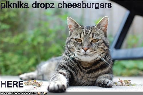 Cheezburger Image 5164071936
