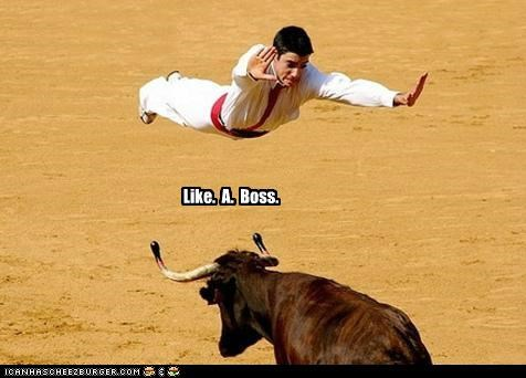 animals bullfighting bulls epic in the air leaping Like a Boss Up Next in Sports - 5164520704
