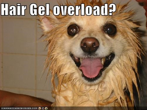 bath,bath time,corgi,hair gel,happy dog,silly dog,smile,smiles,smiling,soaked,water,wet