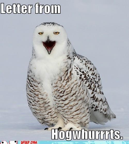 critters Harry Potter hedwig Hogwarts letter - 5164745216