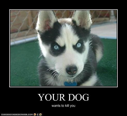 YOUR DOG wants to kill you
