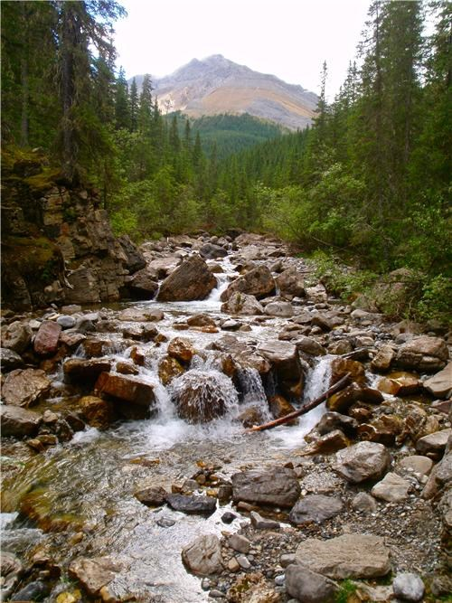 Canada,jasper national park,mountains,national park,north america,stream,user submitted