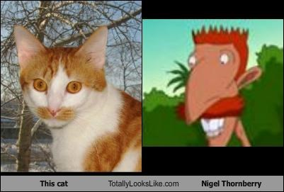 animals cartoon characters cat ginger mustache mustaches nigel thornberry pet redhead redheads - 5165032960