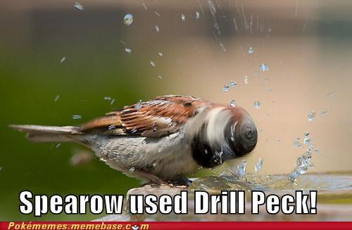 drill peck,IRL,spearow,splash