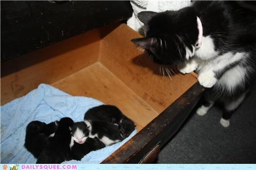 adorable cat Cats kitten mother newborn nurturing protecting protective reader squees safe touching watching - 5165454336