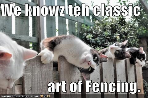 art caption captioned cat Cats classic fence Fencing know pun we - 5165465344