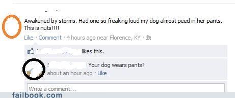 animals dogs pants pee peeing rain - 5165652992