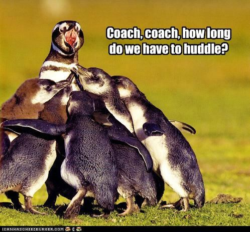 asking caption captioned coach duration how huddle huddling long penguin penguins question - 5166615552