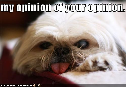 disagree opinion pekingese raspberry shih tzu tongue whatbreed - 5166758656